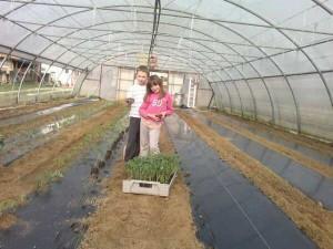 U organskoj proizvodnji ekološkog povrća najvažnija je stavka nastiranje tla ili malčiranje