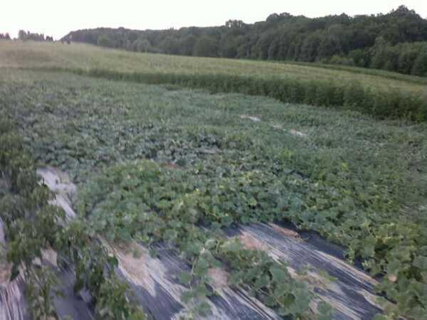 Proizvodnja povrća se obavlja u zatvorenom i otvorenom prostoru
