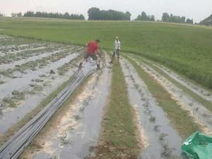 U tijeku je radnja malčiranja i solanizacije, koristimo energiju sunca za spaljivanje korova